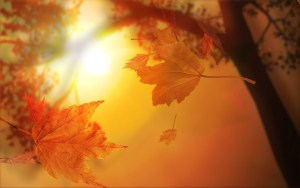 falling-autumn-leaves